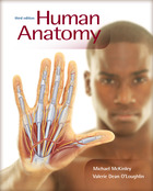Connect 1-Semester Online Access for Human Anatomy